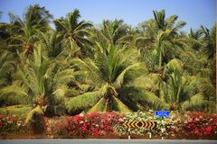 Oman: Lush Salalah. Intersection with lush vegetation in tropical city of Salalah in Oman stock photo