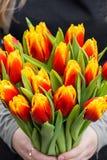 Oman novo que guarda tulipas Molde do vale-oferta, cartaz ou cartão - mulher que guarda o ramalhete das tulipas Fotos de Stock Royalty Free