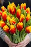 Oman novo que guarda tulipas Molde do vale-oferta, cartaz ou cartão - mulher que guarda o ramalhete das tulipas Foto de Stock