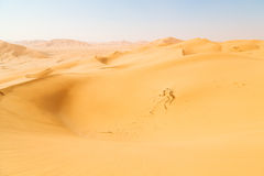 in oman old desert  rub al khali the empty  quarter and outdoor Royalty Free Stock Image