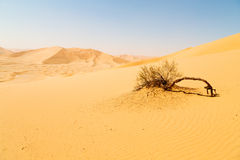 in oman old desert  rub al khali the empty  quarter and outdoor Royalty Free Stock Photography