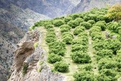 Oman Saiq plateau Fotografia Stock