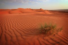 Oman: Wahiba Sands. Beautiful sand desert area called Wahiba Sands in Oman just before sunset Royalty Free Stock Photography
