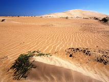 Omani desert. Dunes on the way from Shannah to Al Askarah Stock Images