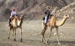 Omani jonge geitjes die kamelen berijden op een stoffige plattelandsweg Stock Foto's