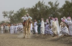 Omani mensen die kamelen op stoffige plattelandsweg rennen Royalty-vrije Stock Foto's