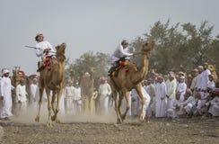 Omani mensen die kamelen op stoffige plattelandsweg rennen Royalty-vrije Stock Foto