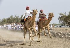 Omani mensen die kamelen op stoffige plattelandsweg rennen Royalty-vrije Stock Afbeelding