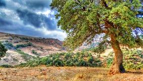 Omaria d'EL Image stock