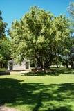 OmbÃ-¹ Baum auf dem Pampagebiet Lizenzfreie Stockbilder