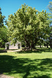 Ombù boom op het pampagebied Royalty-vrije Stock Afbeeldingen