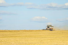 Сombine harvester are working on harvesting in the field. Agricultural background Royalty Free Stock Photo