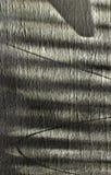 Ombra & chiglia Immagini Stock Libere da Diritti