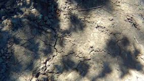 Ombra degli alberi sulla terra stock footage