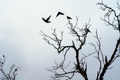Ombra degli uccelli che volano fuori Immagine Stock Libera da Diritti