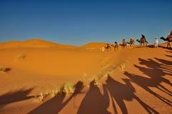 Ombra dei cammelli nel deserto di Merzouga Fotografia Stock