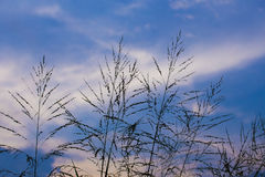 Ombra dei fiori dell'erba Fotografie Stock Libere da Diritti