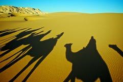 Ombra del caravan del cammello Fotografia Stock Libera da Diritti