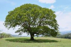 Ombra del pezzo fuso dell'albero Immagine Stock
