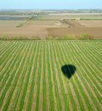 Ombra dell'aerostato di aria calda sopra il campo del raccolto di riga Fotografia Stock