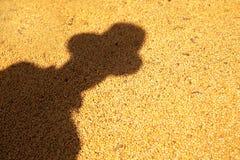 Ombra dell'agricoltore gettata nel lotto di soia Fotografie Stock Libere da Diritti