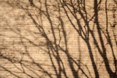 Ombra dell'albero Immagini Stock Libere da Diritti