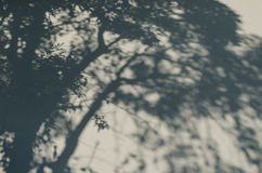 Ombra dell'albero Fotografia Stock