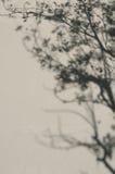Ombra dell'albero Immagini Stock