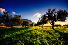 Ombra dell'albero con il tramonto Fotografie Stock Libere da Diritti