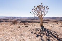 Ombra dell'albero del fremito Fotografia Stock
