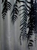Ombra dell'albero del granello di pepe Fotografie Stock Libere da Diritti