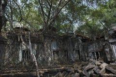 Ombra dell'albero di Angkor Wat Beng Mealea Immagini Stock Libere da Diritti