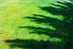 Ombra dell'albero sul campo di erba Fotografia Stock Libera da Diritti