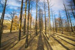 Ombra della foresta bruciata immagine stock libera da diritti