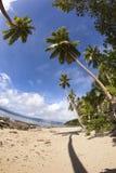 Ombra della palma Fotografia Stock Libera da Diritti