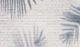 Ombra della palma sul muro di mattoni immagine stock