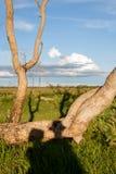 Ombra delle coppie in savana africana, Botswana Fotografia Stock