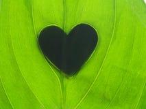 Ombra di forma del cuore sulla foglia verde Fotografia Stock