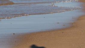 Ombra di un uccello sulla sabbia di una spiaggia video d archivio