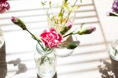 Ombra di vari fiori Fotografie Stock Libere da Diritti