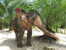 Ombra e l'elefante Fotografia Stock Libera da Diritti