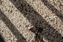 Ombra ed asfalto immagini stock libere da diritti