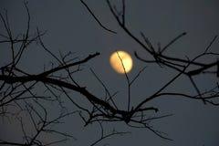 Ombra spettrale delle foglie morte dell'albero nella notte scura con luce della luna gialla della sfuocatura fotografie stock libere da diritti