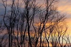 Ombra sul tramonto Immagine Stock