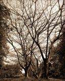 Ombre Photo libre de droits