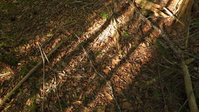 ombre Fotografia Stock