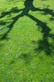 Ombre d'été photo stock