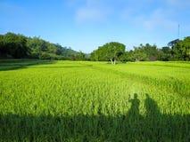Ombre d'amitié se reposant sur le pont voyant le riz vert luxuriant f Photo stock