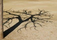 Ombre d'arbre Photographie stock