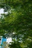 Ombre d'arbre Image stock